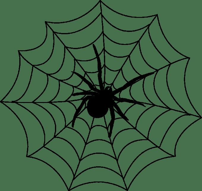 The Findaspider Guide  Spider Info