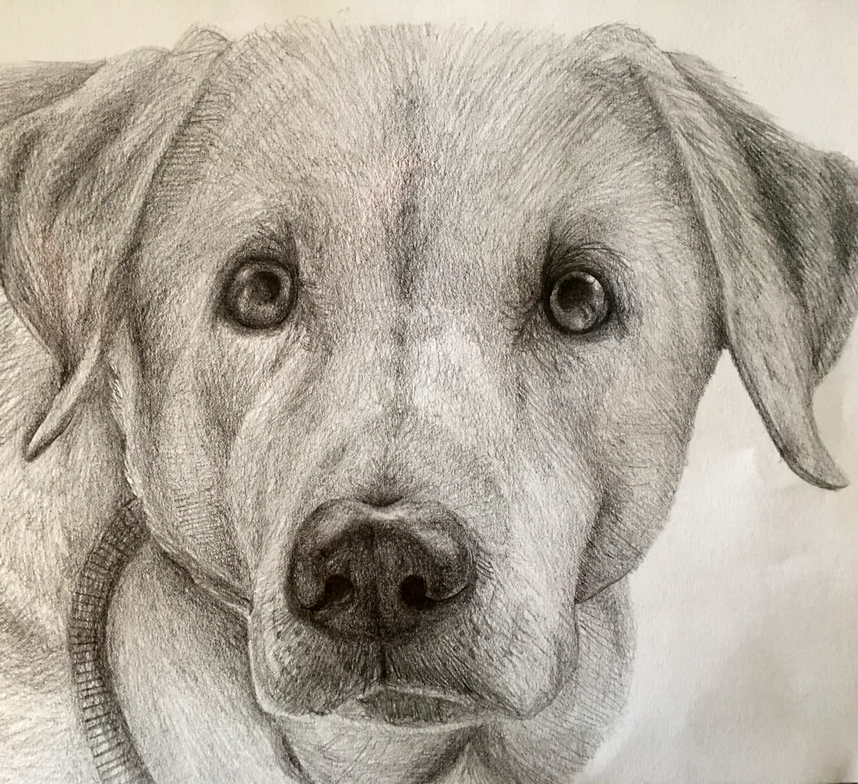 I will hand draw a pencil sketch of your pet