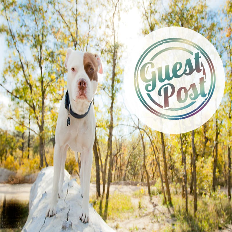 publish a guest post genuine dog blog
