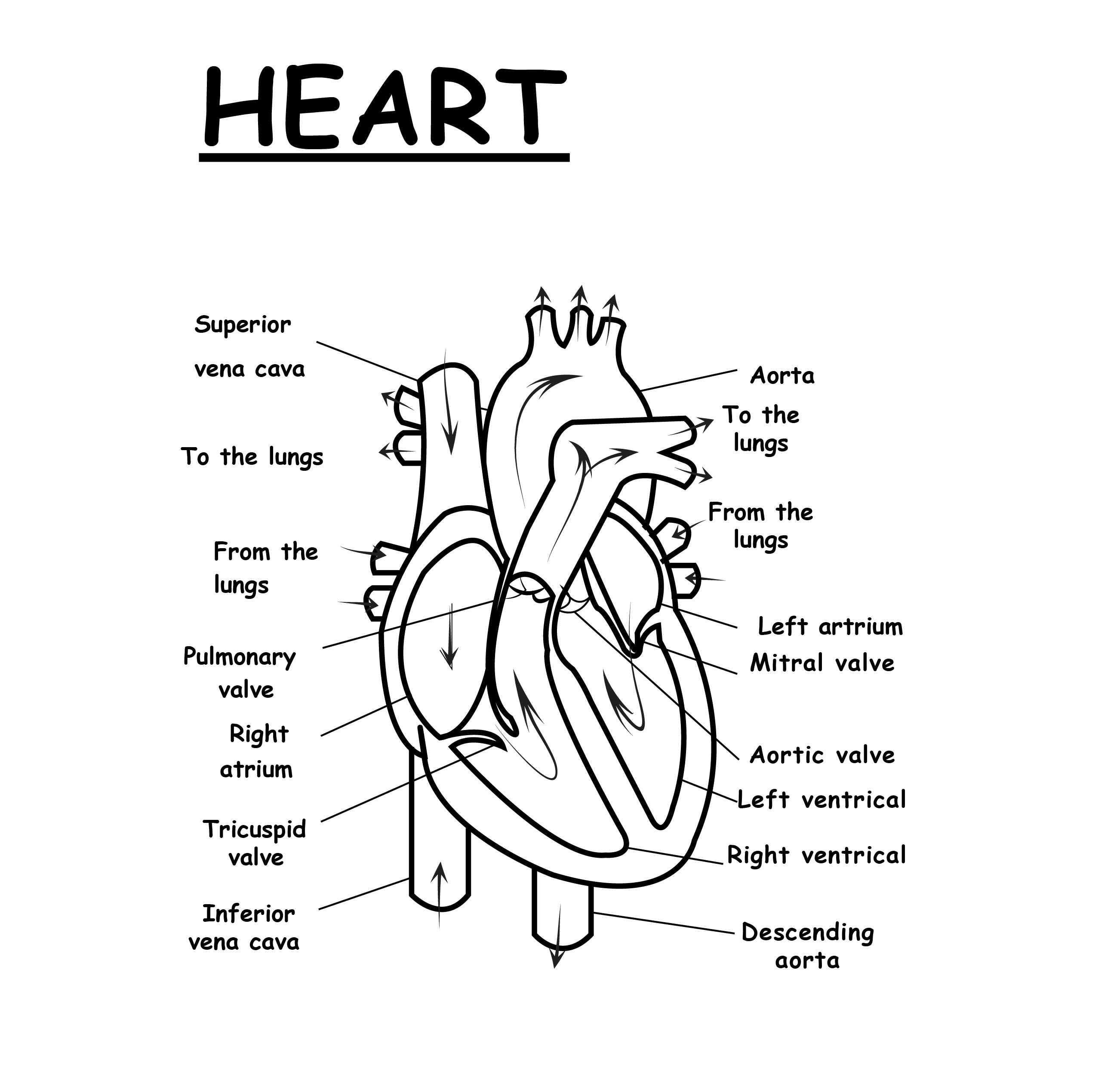 33 Human Heart To Label - Best Labels Ideas 2020