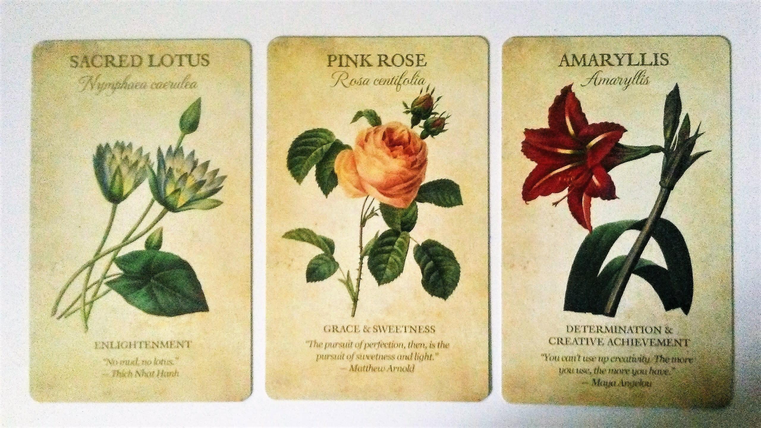 Lotus tarot card reading online, free