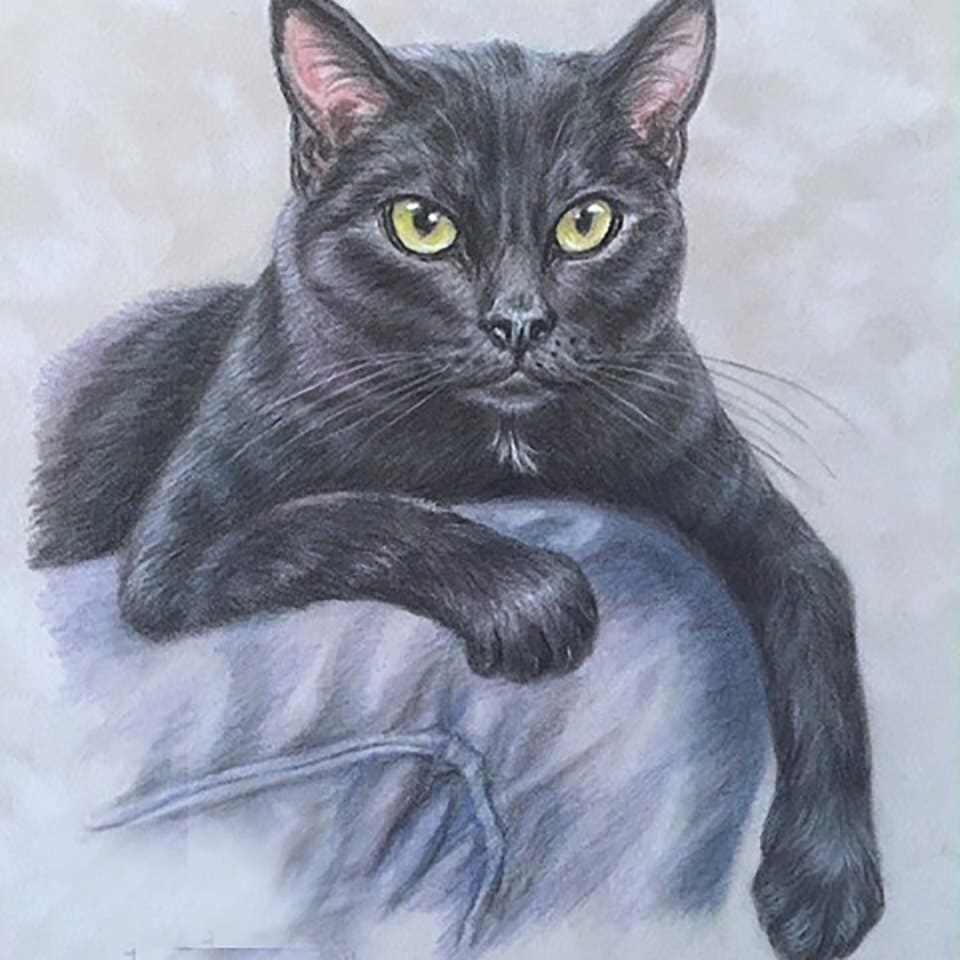 Draw Realistic Art Portrait Of Your Cat Dog Or Any Pets By House Jmichelle
