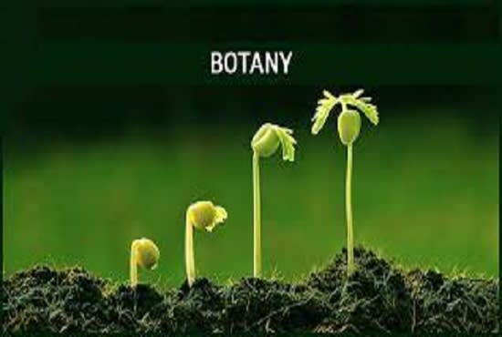 Write botany blog post human resources business plan and casino