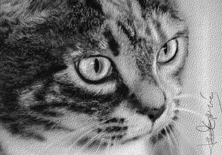 draw a charcoal portrait of you or your pet