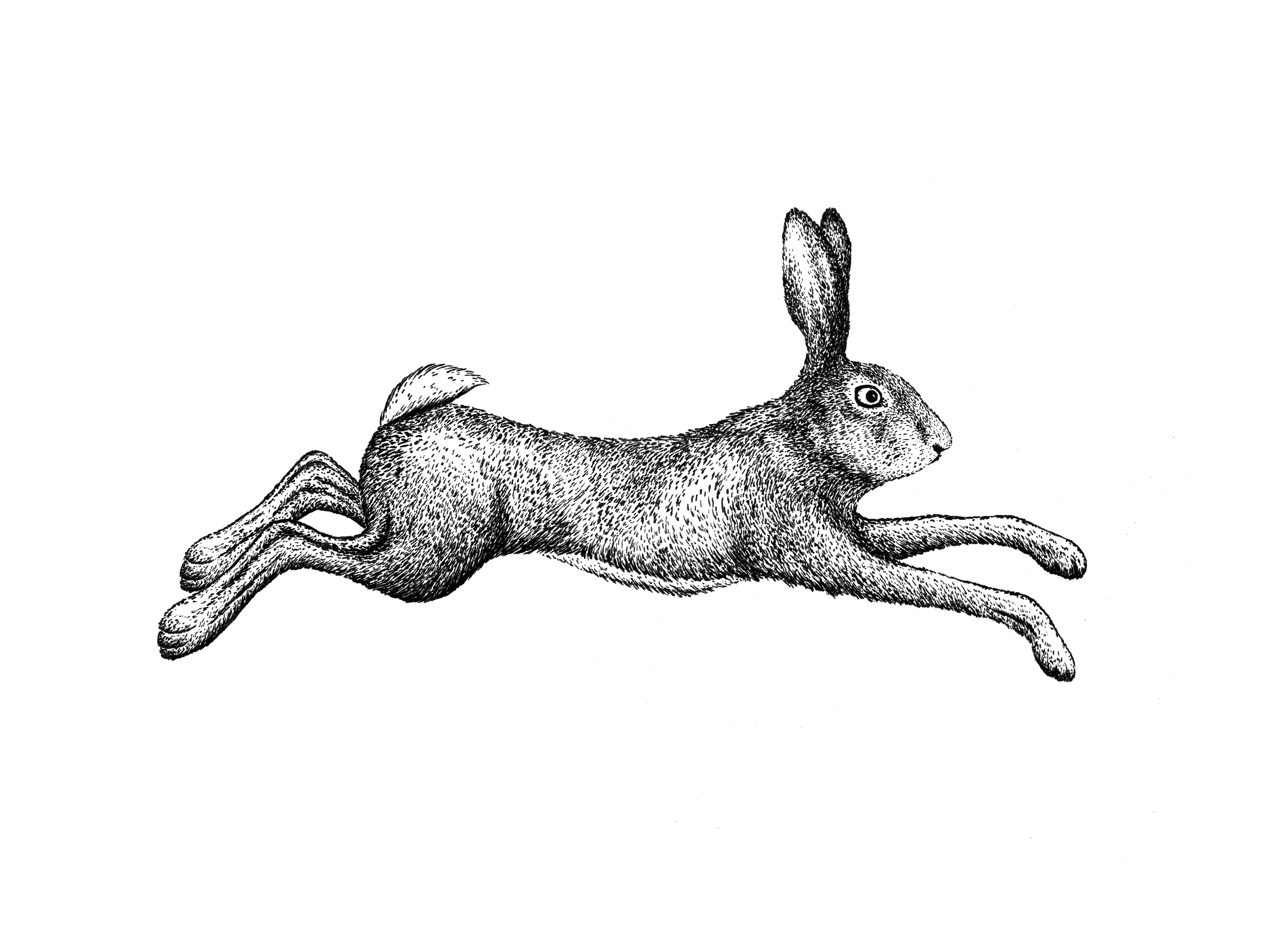 - Draw Realistic Animal Adult Coloring Book Illustration By Kseniyart