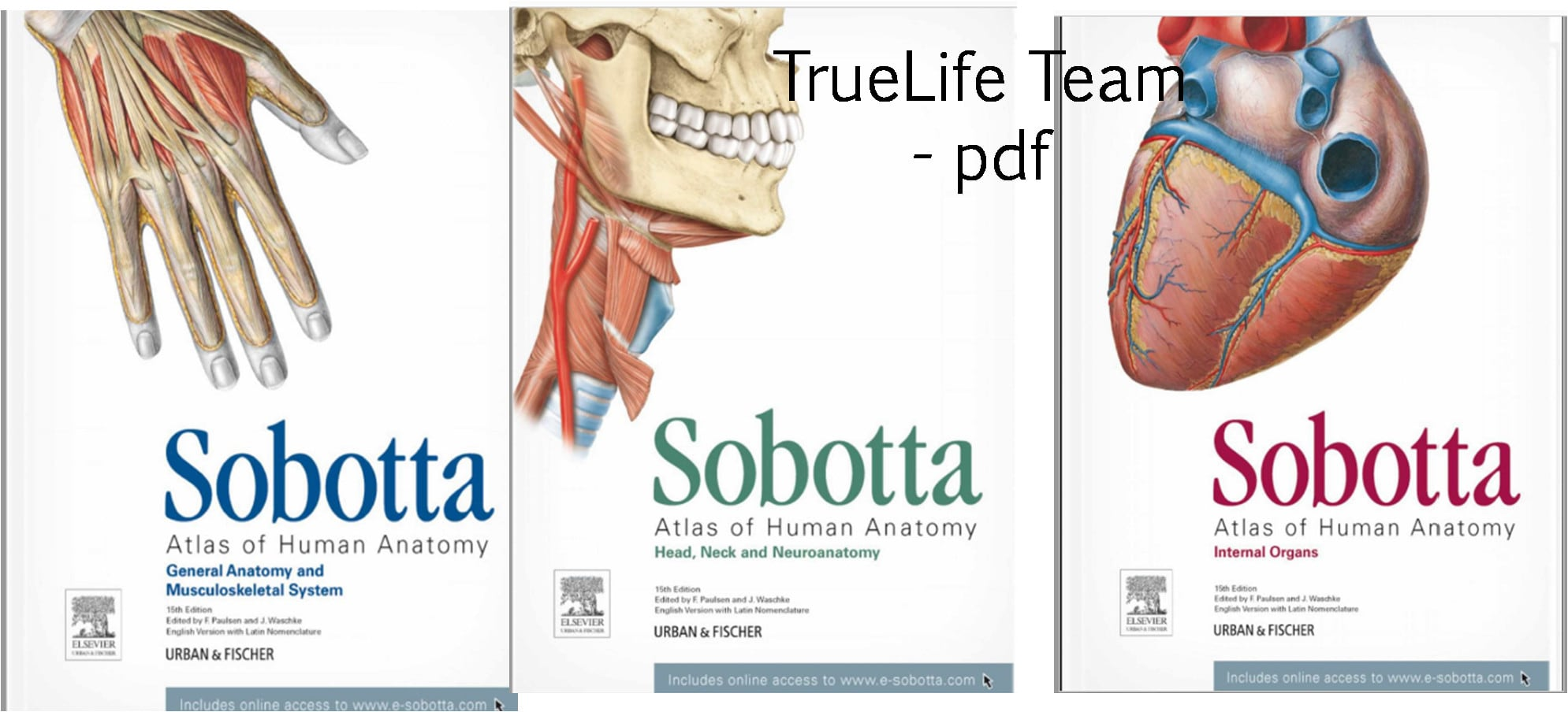 Provide You Most Popular Medical Ebooks Anatomy Etc By Truelifeteam