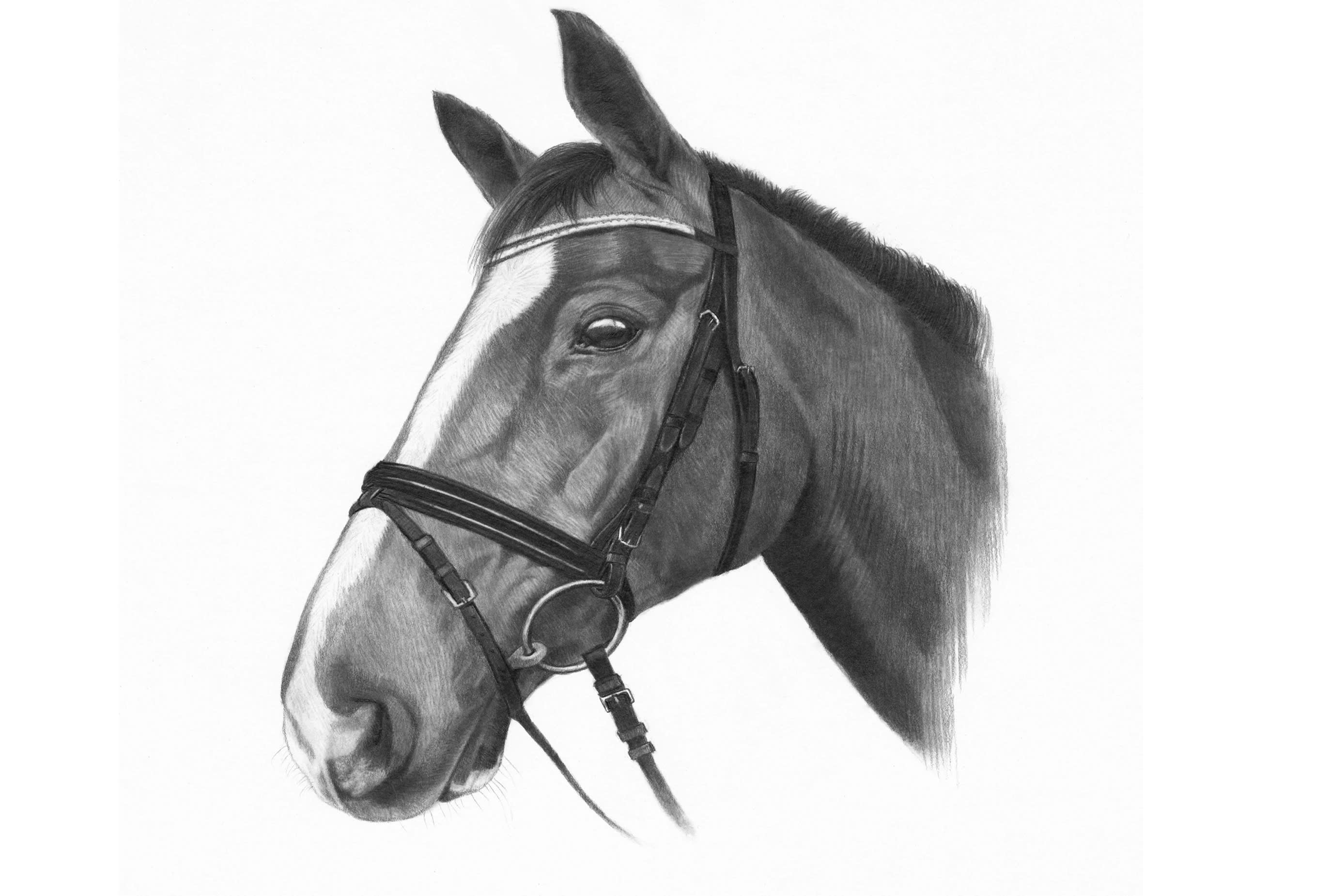 Draw An Amazing Realistic Pencil Portrait Of Your Pet By Nadeeshdesign