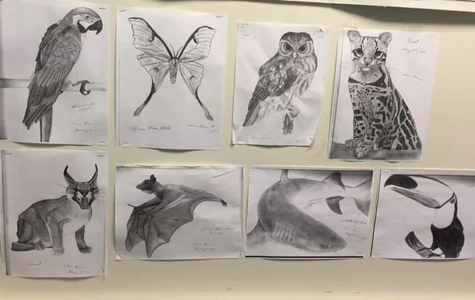 Draw Realistic Animals Of Any Kind By Cbrown6