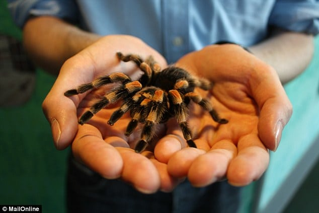 conquer your fear of spiders