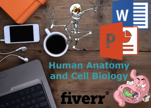 Investigate anatomy and cell biology for you by Ezeadla