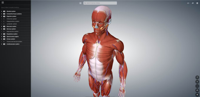 Provide You A Program Which Shows The Complete Human Body By Hanszug