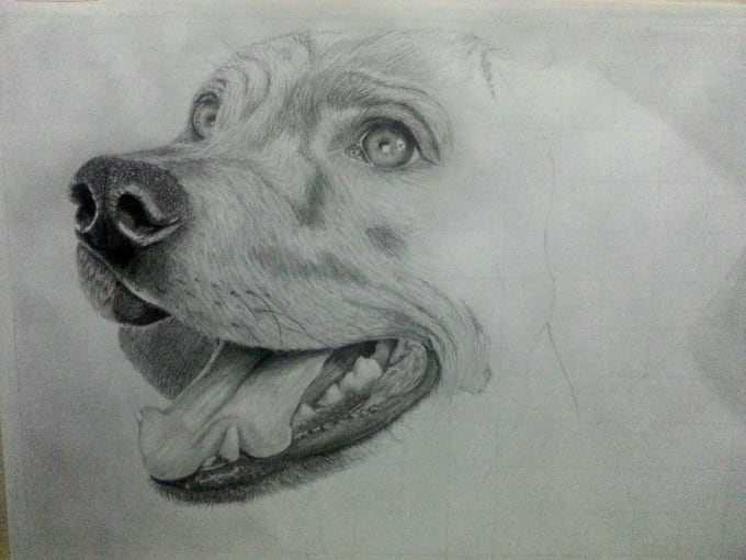 draw realistic pet animal drawing in graphite pencil by fishtank84