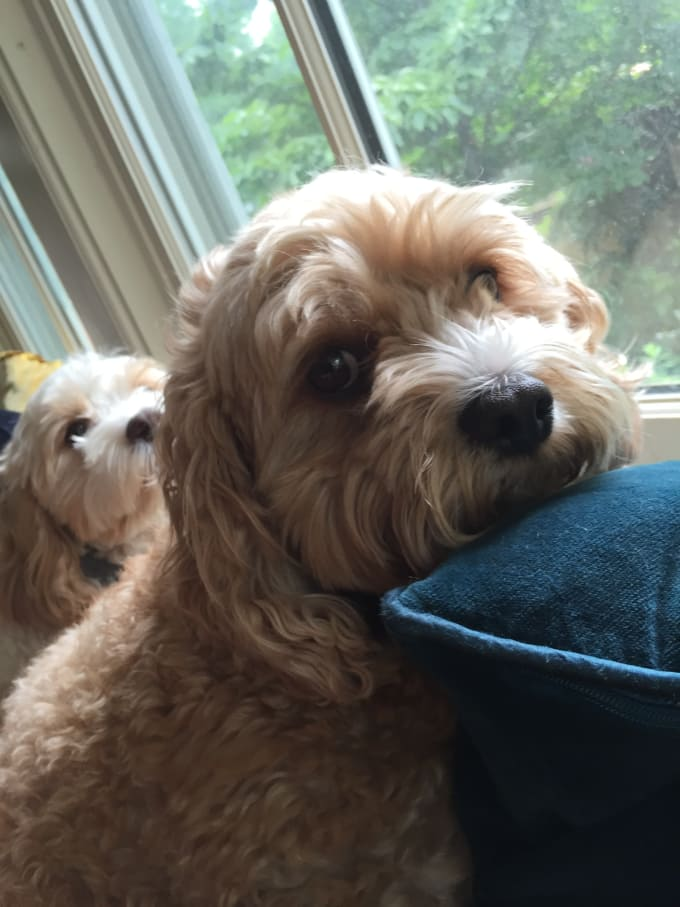 Take A Video Of My Dogs To Cheer You Up By Rayanjc