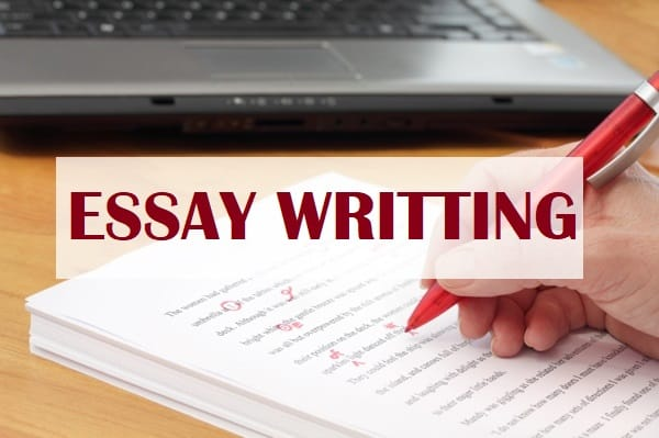 Essays On College Education  Essay Thesis Statements also Science Vs Religion Essay Do Business Essay And Research For Your Management Tasks Business Law Essay Topics