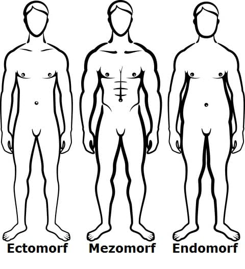 aurelian : I will customize a workout plan for you based on your body type  edomorph mezomorph ectomorph for $5 on www fiverr com