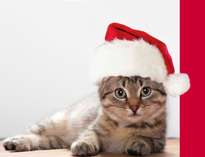 Put a santa hat on your cat photo to make a christmas card by ...