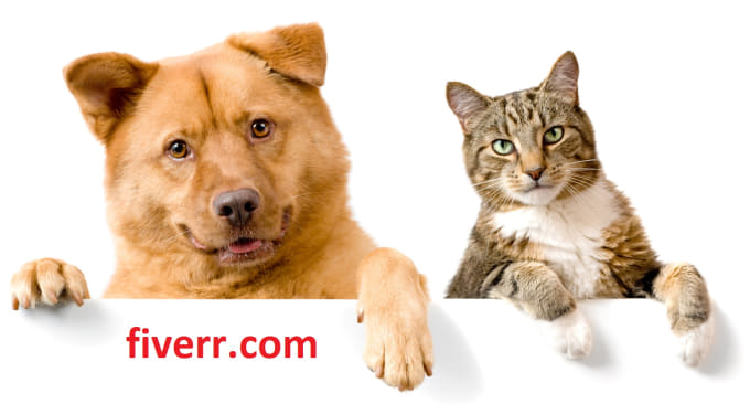 make a banner with my pets