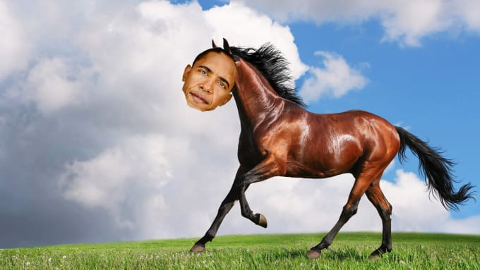 Photoshop Your Face Onto This Beautiful Horse By