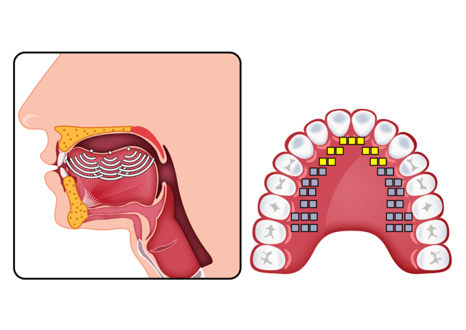 Digitally Draw Or Illustrate Anatomy Diagrams By Dzinrz