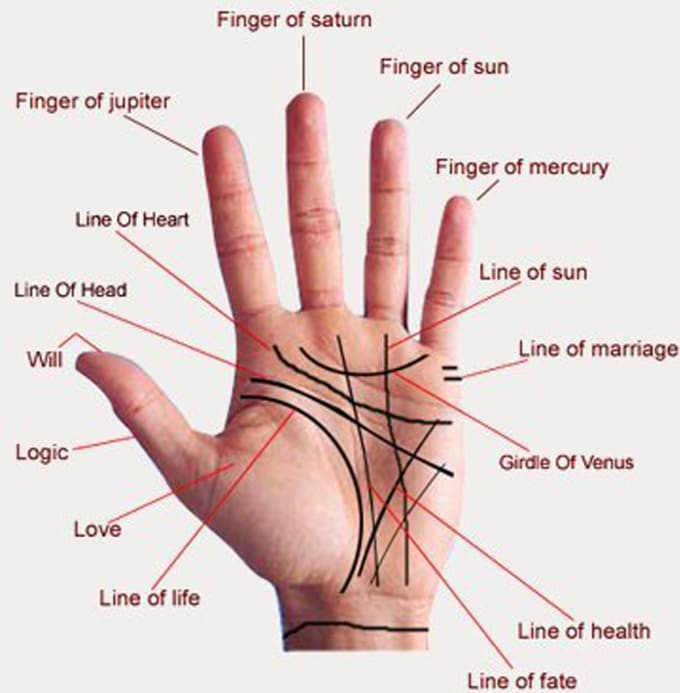 do accurate palm reading and tell about future