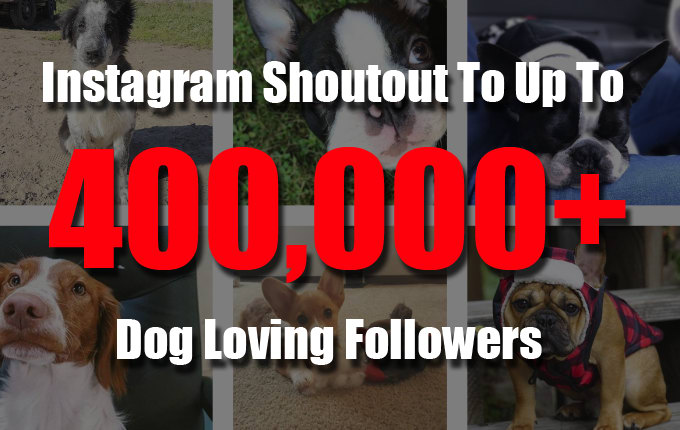 give you an instagram shoutout to up to 400k dog lovers