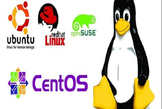 manage citrix and linux system as a system administrator