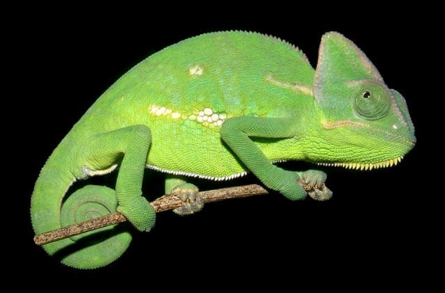 3d print out a logo or name and put it in my chameleon  cage