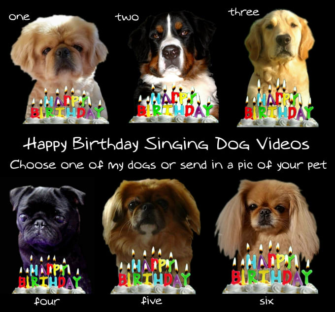 Make A Happy Birthday Dog Or Cat Singing Video By Gooberella