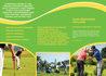 creative-brochure-design_ws_1445264917