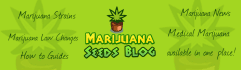 web-banner-design-header_ws_1397227461