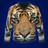 t-shirts_ws_1448477556