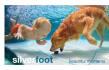buy-photos-online-photoshopping_ws_1469003598