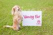 pet-modelling_ws_1470617955