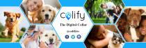 social-media-design_ws_1483117448