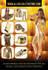 creative-brochure-design_ws_1485033722