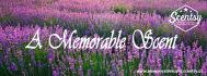 buy-photos-online-photoshopping_ws_1487784970