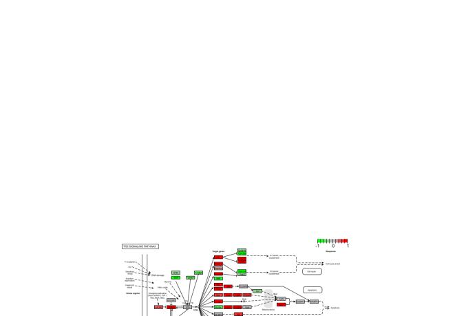 vector-tracing_ws_1487339377