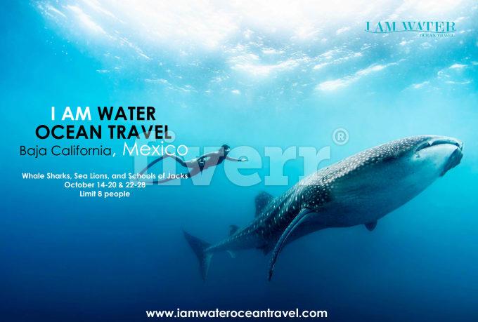 creative-brochure-design_ws_1481641413