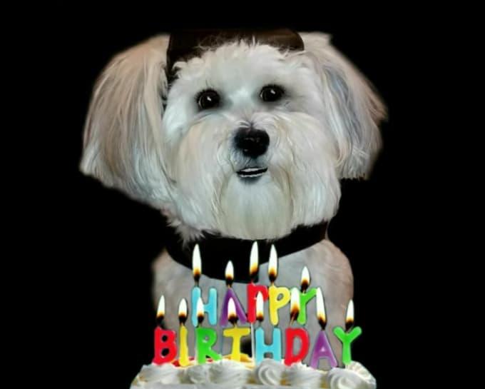 Make A Happy Birthday Dog Or Cat Singing Video By Gooberella