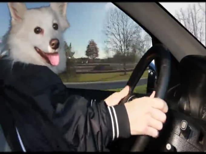 dog elf