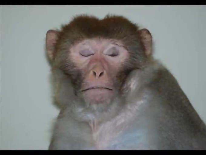 Monkey_singing