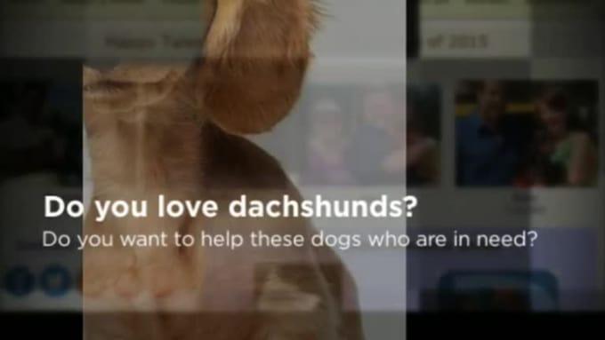 dachshundrescuesouthflorida