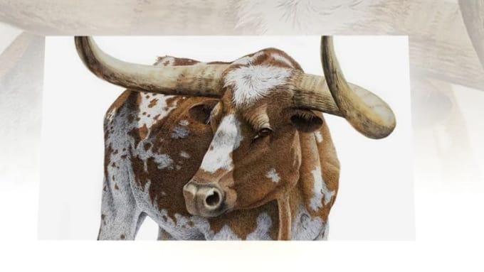 Animal & Nature Slideshow
