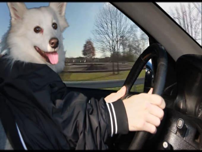 dogcloud new