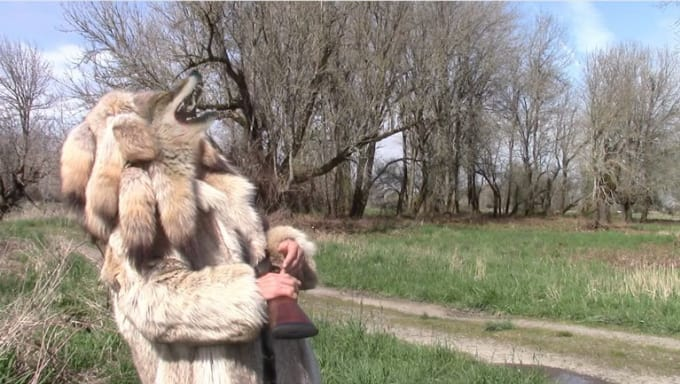 coyote_bob_3