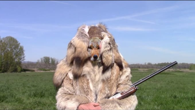 coyote_bob_5