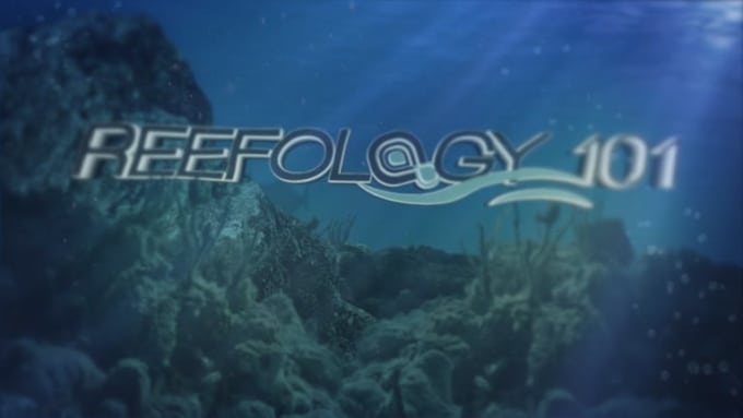 Reefology-HD 1080p