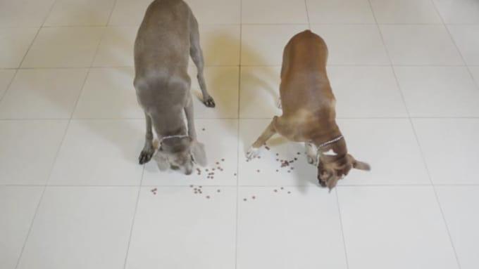 Doggieamore