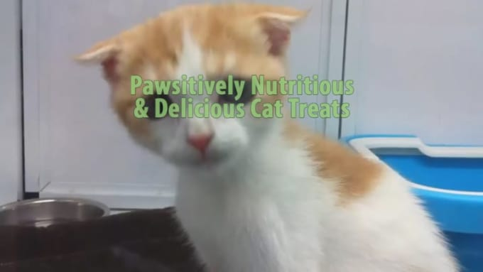 pawsitively_nutritious