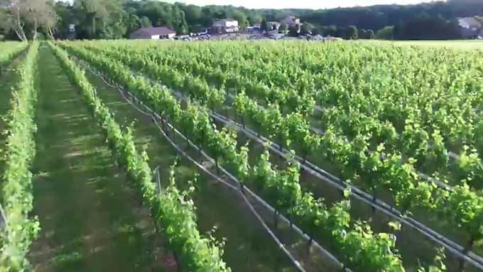 Harford-Vineyard